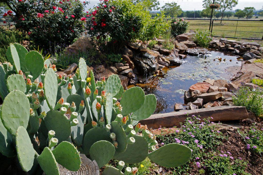 Cactus grows next to a pond at Golden Farms.