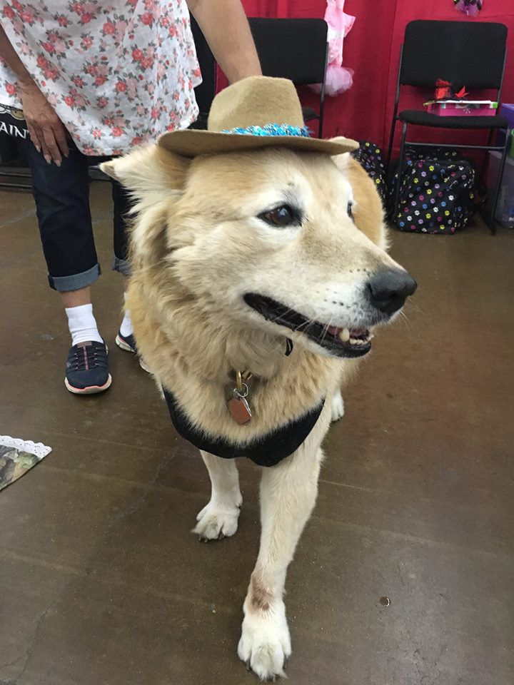B.K. tried on a hat during a previous Dallas Pet Expo.