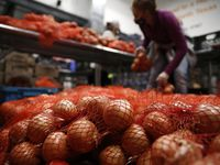 One source of infections had been traced to onions imported from Chihuahua, Mexico, and distributed by ProSource Inc., also known as ProSource Produce, LLC, based in Hailey, Idaho.