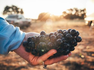 Bending Branch Winery and Tallent Vineyards share the first award of the Texas Sustainable Winemaking Competition.