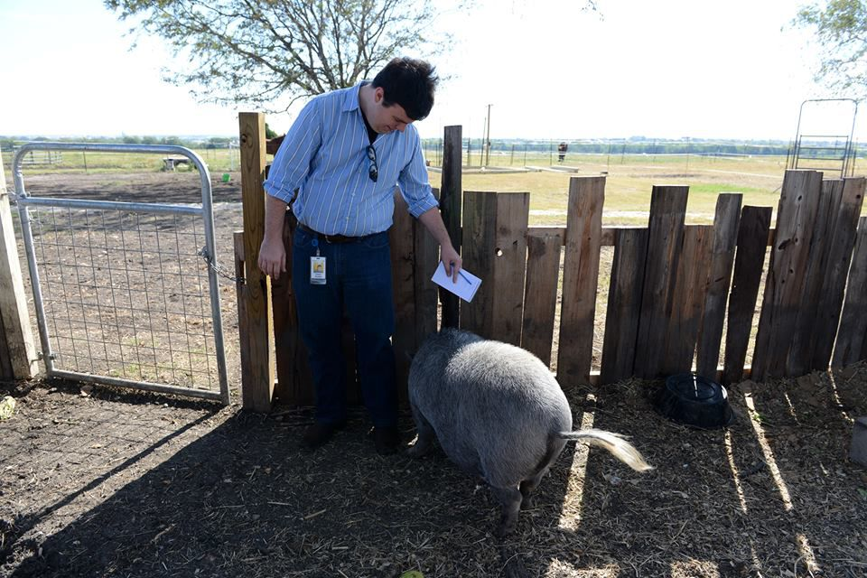Allen-Frisco-McKinney editor Charles Scudder meets Pancake the pig at Becky's Hope Horse Rescue in Frisco. (Rose Baca/neighborsgo)