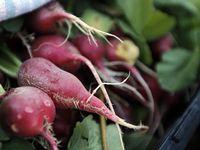 El condado de Dallas abre solicitudes para su Programa de Asistencia de Despensa de Alimentos para organizaciones que proveen alimentos a los residentes del condado.