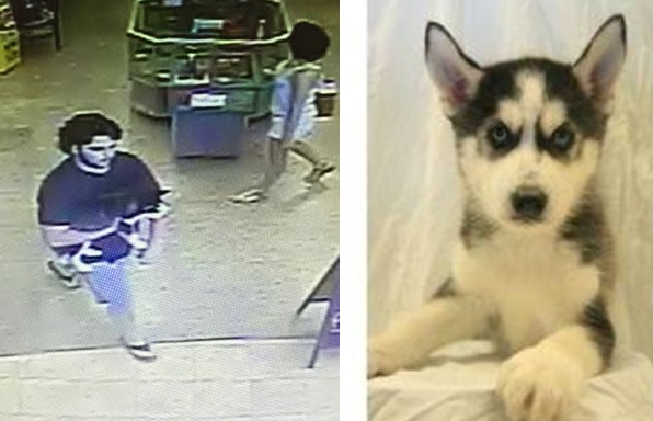 Stolen Puppy Worth Thousands Of Dollars Returned To Dallas Pet Shop