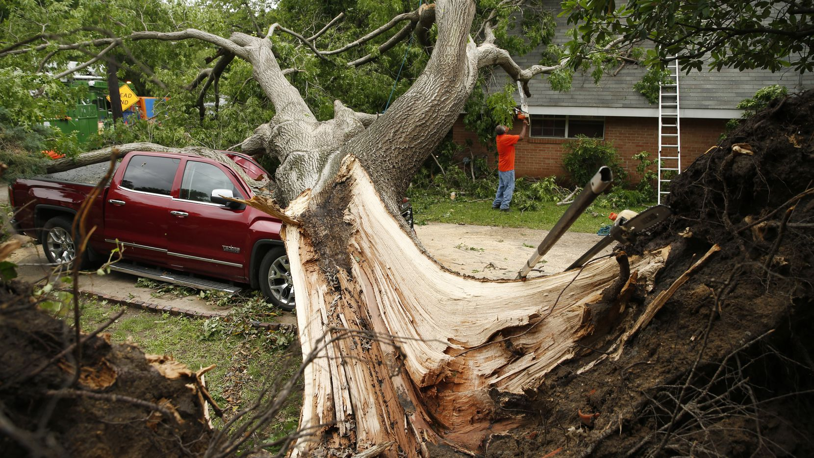 A red oak tree that fell as a tornado passed through Denton the previous day is seen on May 1, 2019. The tree, planted in the 1960s, crushed the pickup and punctured a hole in the roof of the house and a bedroom ceiling, letting rain pour in.