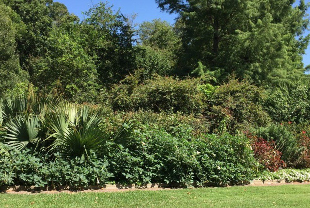 Create a privacy screen around your property with various plants and trees.