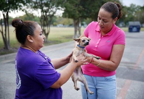 Angie Chavez, la directora de SPCA de Texas, toma a Spot de su dueña, Yolanda Ávila, en el Umphress Recreation Center en Dallas.