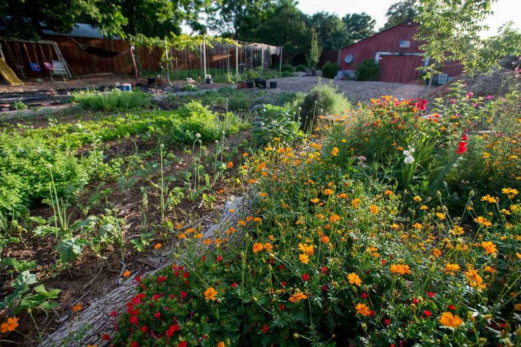 Flowers and vegetables abound on Jefferson Braga's farm in Irving.