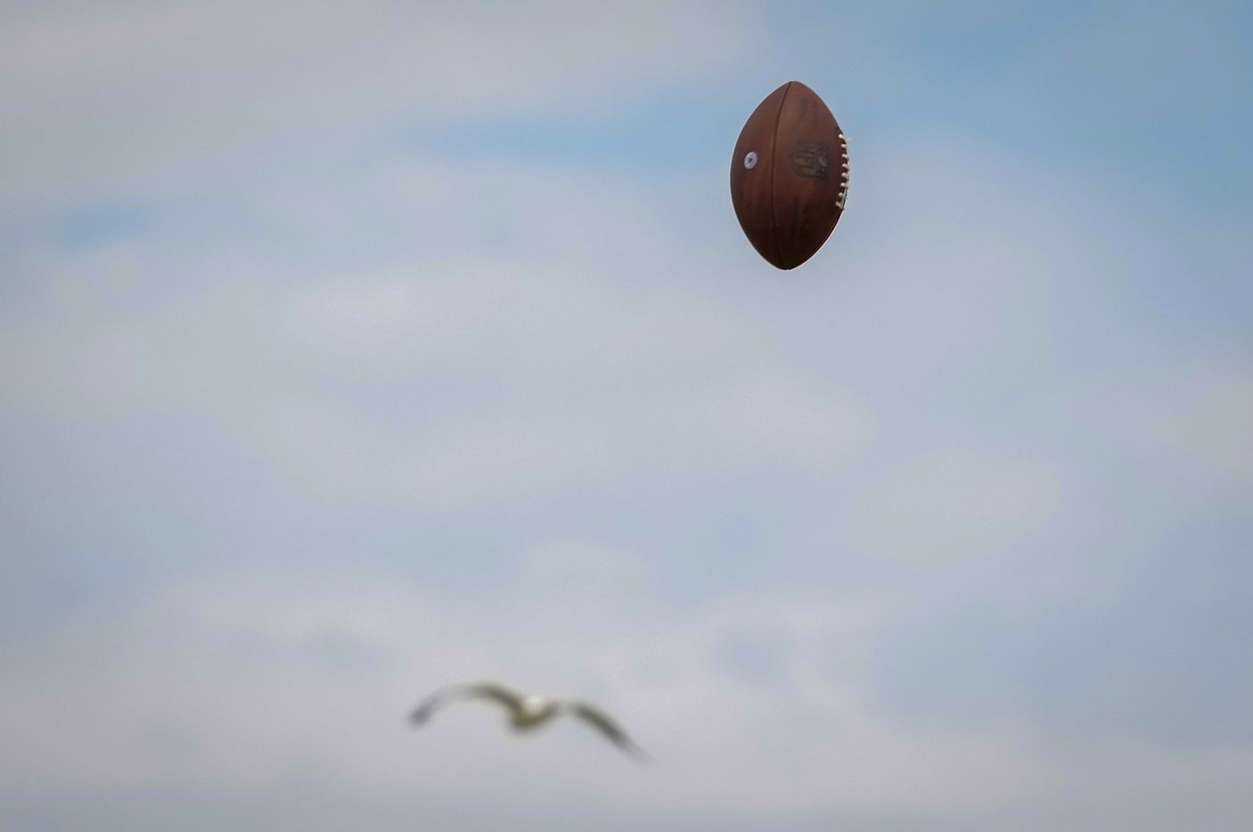 A ball sent high in the air on a punt return drill shares the sky with a seagull during a practice at Dallas Cowboys training camp on Wednesday, Aug. 11, 2021, in Oxnard, Calif.