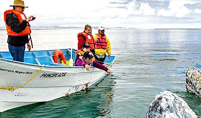 Inicia el año teniendo un gran encuentro. El avistamiento de ballena gris en Baja California Sur comenzó el 15 de diciembre y, aunque de acuerdo con la Comisión Nacional de Áreas Naturales Protegidas (CONANP) se extenderá hasta mediados de abril, enero es un buen mes para vivir esta experiencia. AGENCIA REFORMA.