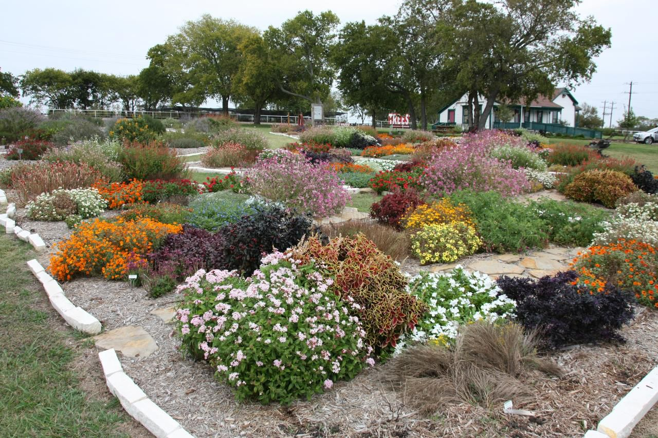 Master gardeners have been tending trial gardens sponsored by the Texas A&M AgriLife Extension Service in McKinney's Myers Park since 2010. They have kept data on which of the perennials performed best using little water and requiring minimal maintenance.