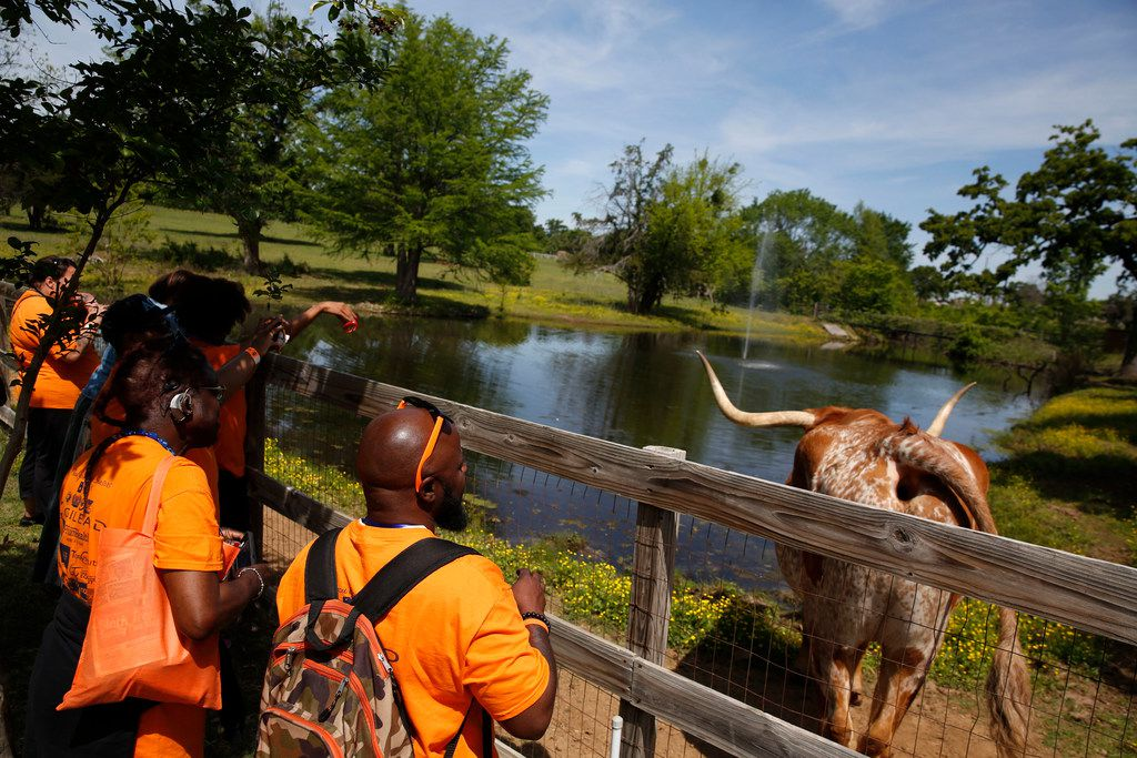 Families visit Amigo the longhorn during the conference's family picnic.