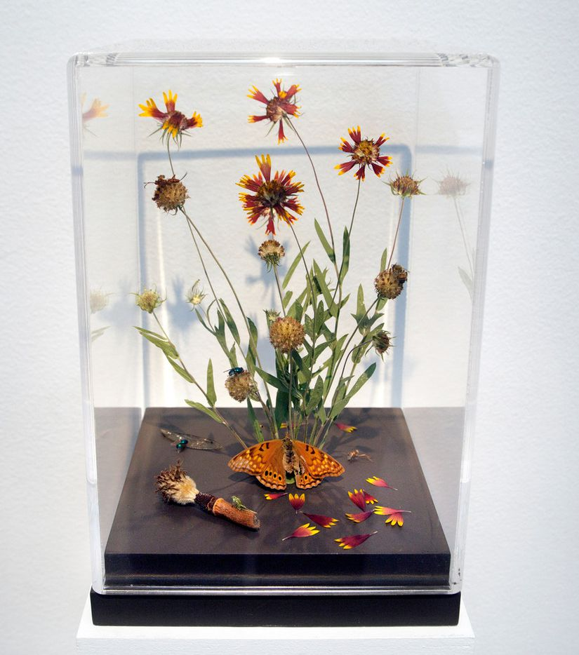 'BLU-82 aka 'Daisy Cutter' bomb, U.S. Military, 1970-2008,' pressed and found flora, found insects, botany pins, floral clay, glue, paint, plexiglass box and wood base.