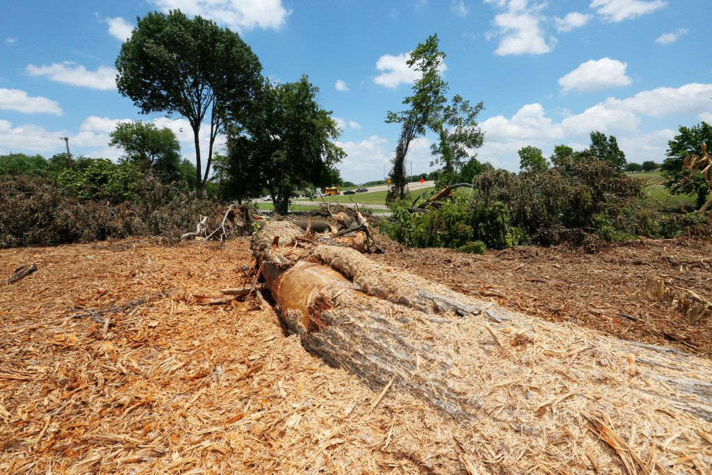 A fallen tree remains after approximately 70 protected trees were knocked down by property owners in Red Bird.