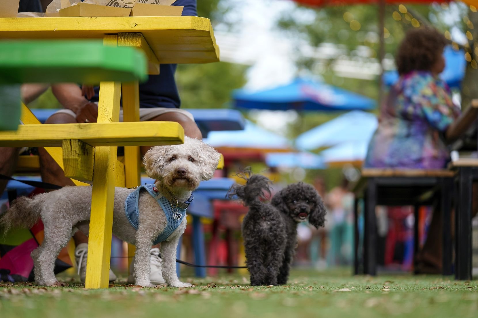 Dogs are allowed at the ArtPark in West Dallas.
