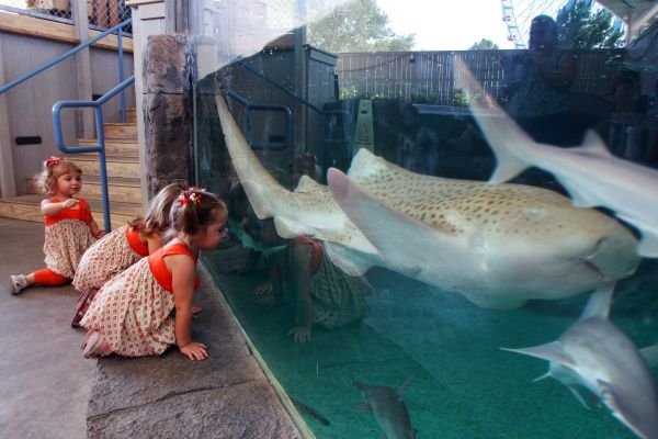 Leah Towell, 2, Hannah Towell, 4, and Kaely Smith, 2, view sharks at the Children's Aquarium at Fair Park.