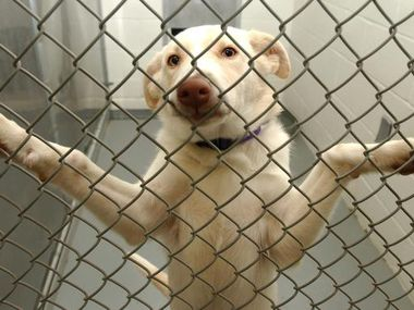 The Richardson Animal Shelter will waive adoption fees for a week this September.