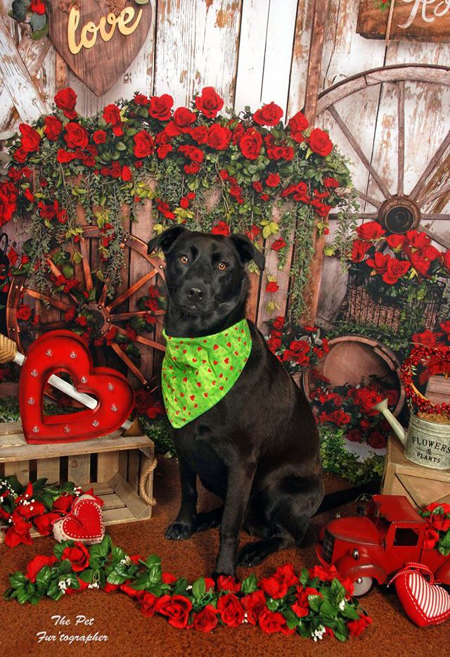 Bark Out Loud's Valentine Social on Saturday will feature portraits, door prizes and refreshments.