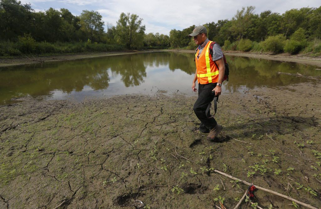 In the summer of 2014 it was Ben Sandifer, seen here, who discovered the partial draining of a wetland pond near the Trinity River for construction of the nearby golf course in the forest only the very wealthy will ever get to use.