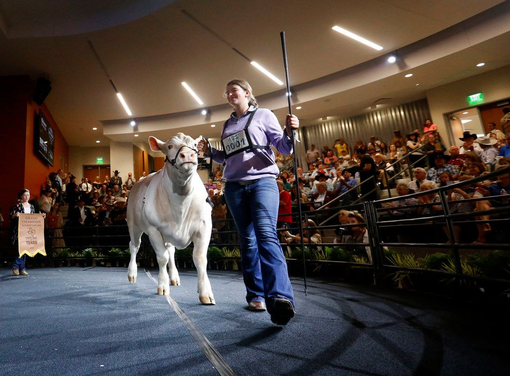 Ashton Floyd, 14, walks her grand champion steer during the auction in the Briscoe Carpenter Livestock Center at the State Fair of Texas in Fair Park in Dallas on Friday, Oct. 5, 2018. Ultra, the Grand Champion Steer, was auctioned off for $150,000 to Jim and Paula Prewitt of Landmark Nurseries and the Big Tex Champion Club. (Rose Baca/The Dallas Morning News)