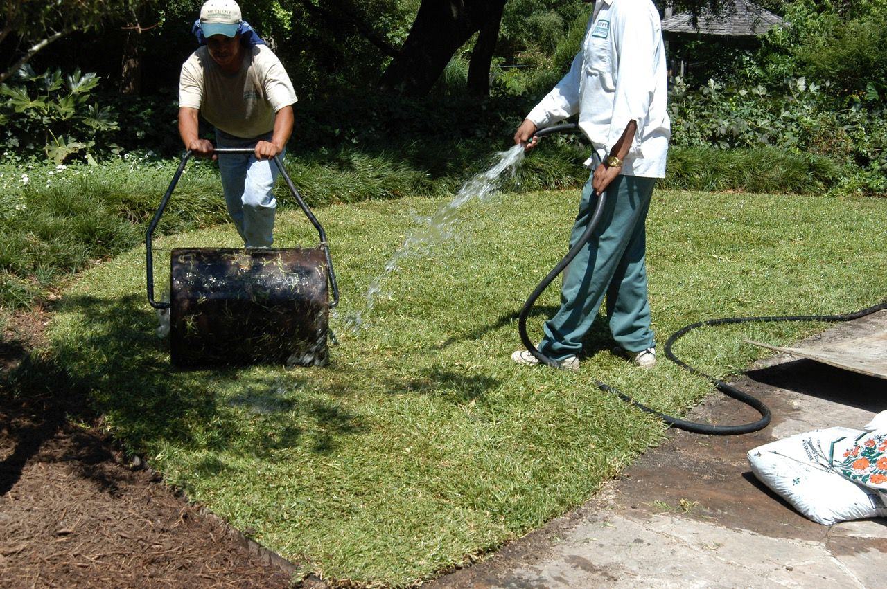 All types of solid sod can be planted successfully in the fall.
