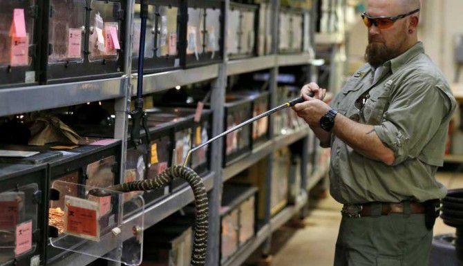Bradley Lawrence, supervisor del área de reptiles y anfibios del Zoológico de Dallas, saca a una cobra de su celda. (DMN/NATHAN HUNSINGER)
