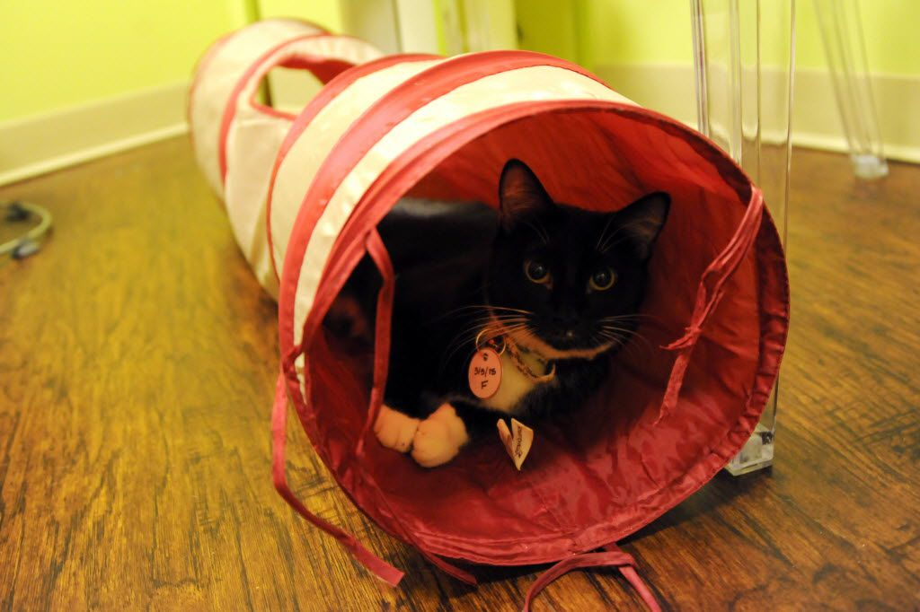Daphne hangs out in a tunnel at The Charming Cat Corner.