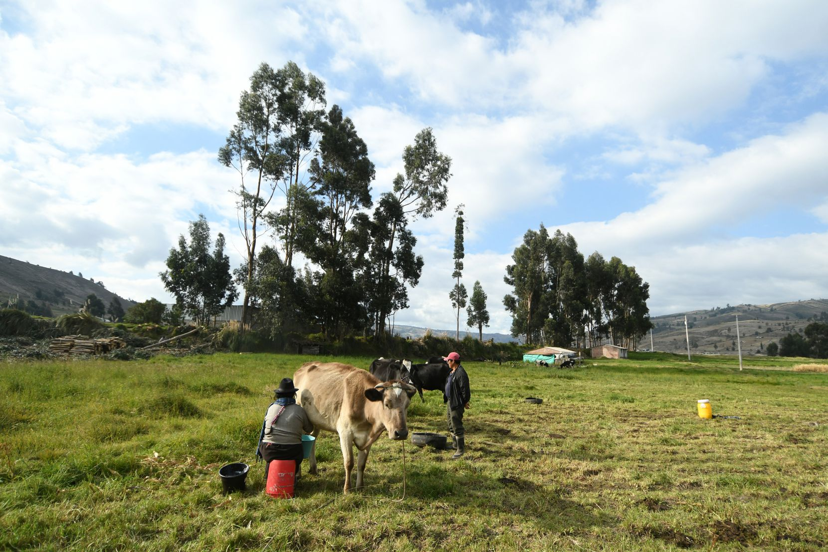 Maria, 51, and her husband Cesar, 51, milk one of their cows near their home in the Chimborazo province of Ecuador on Aug. 7, 2021. They take care of cattle and produce cheese on a daily basis. Their sons would occasionally help them before they migrated to the U.S.