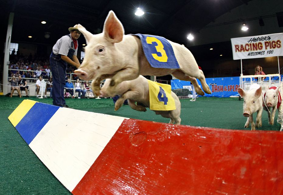 Before you go hog wild inside the State Fair of Texas, you've got to get an admission ticket.