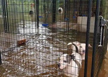 Los perros fueron rescatados cerca de Houston. DMN