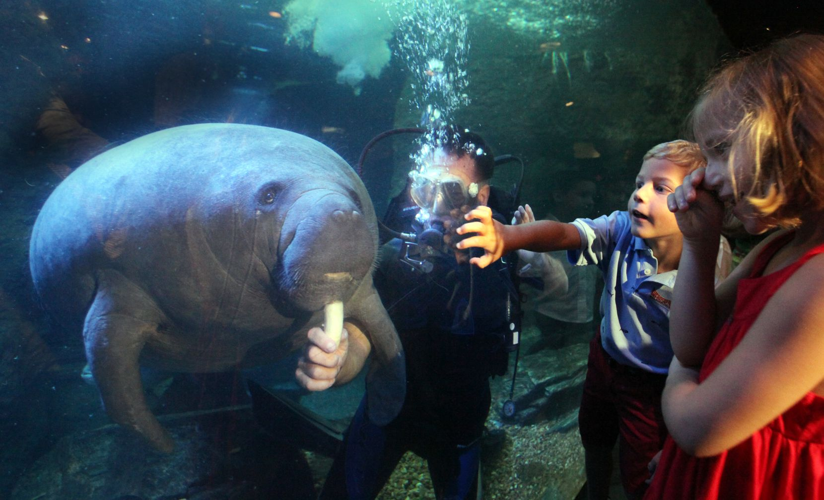 Children reacted to Nigel Marven, a wildlife expert from England, as fed a manatee a banana as part of the national launch of Webosaurs at the Dallas World Aquarium in 2009.