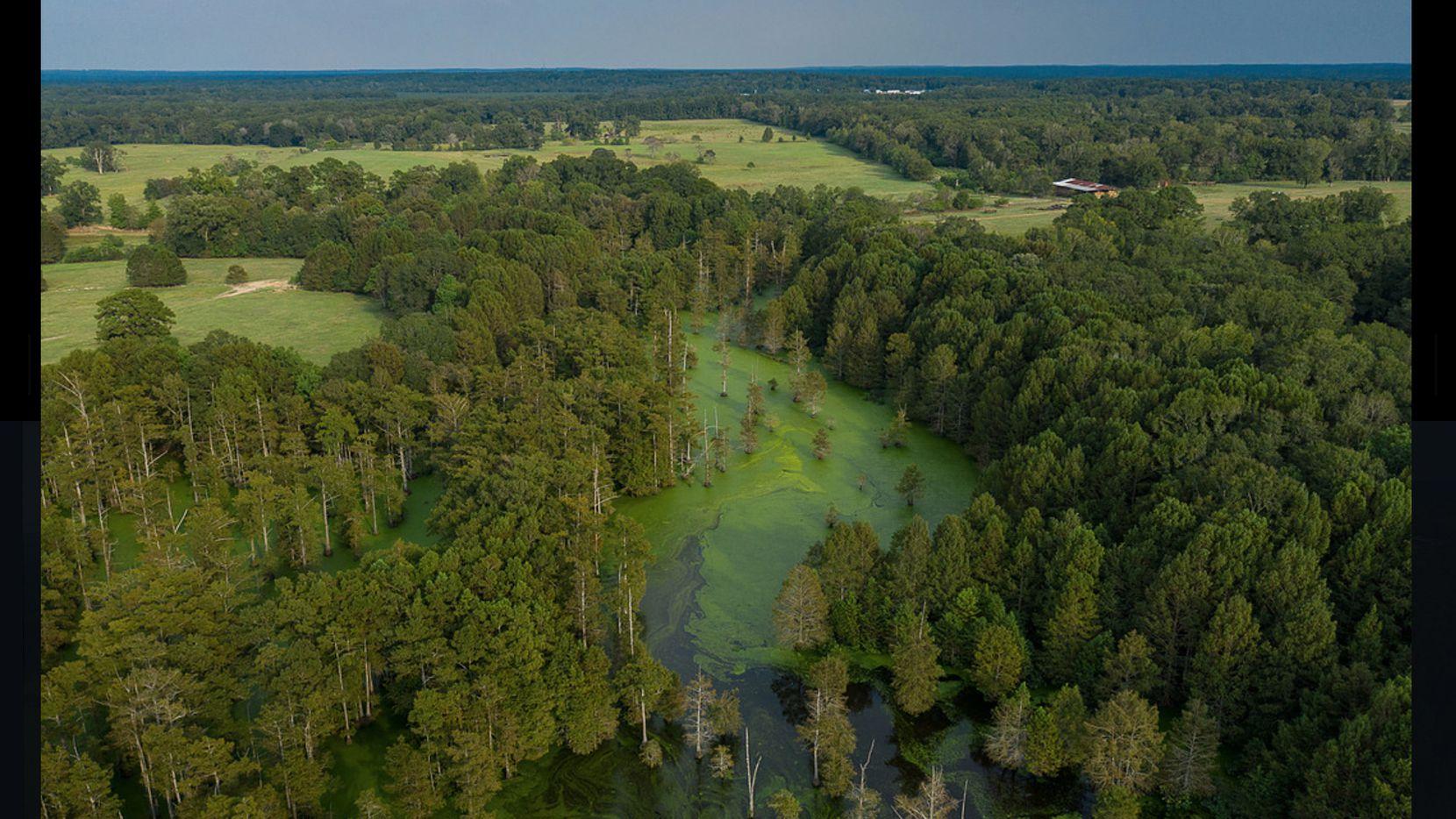 Big Cypress Bayou River Ranch is near Caddo Lake.