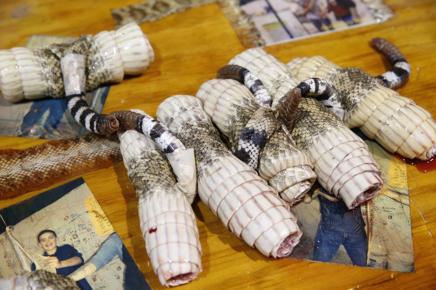 Rattlesnake skins rolled up fresh after being skinned. (Nathan Hunsinger/The Dallas Morning News)