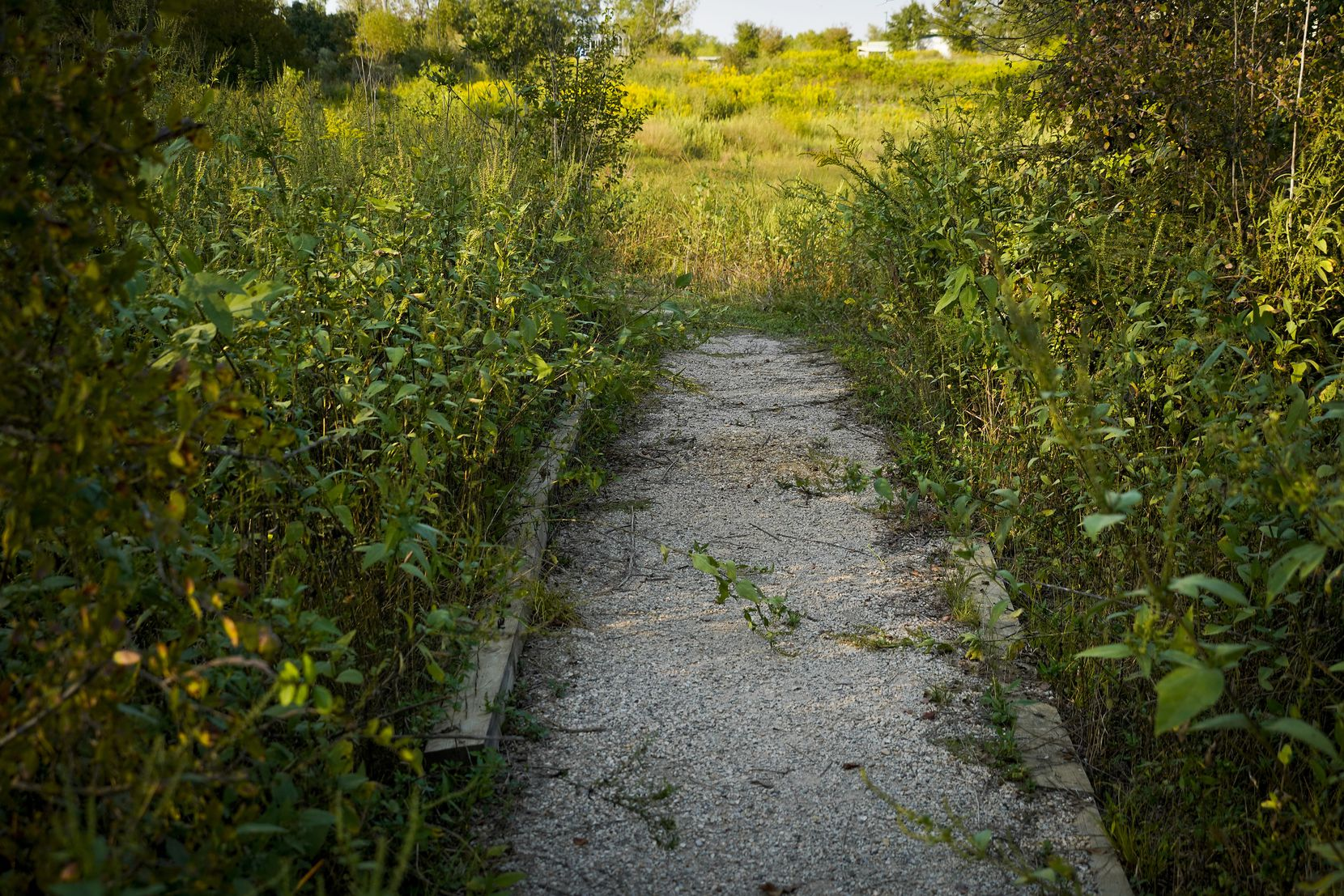 A pathway on the Primitive Pond Trail cuts through grass at the Trinity River Audubon Center.