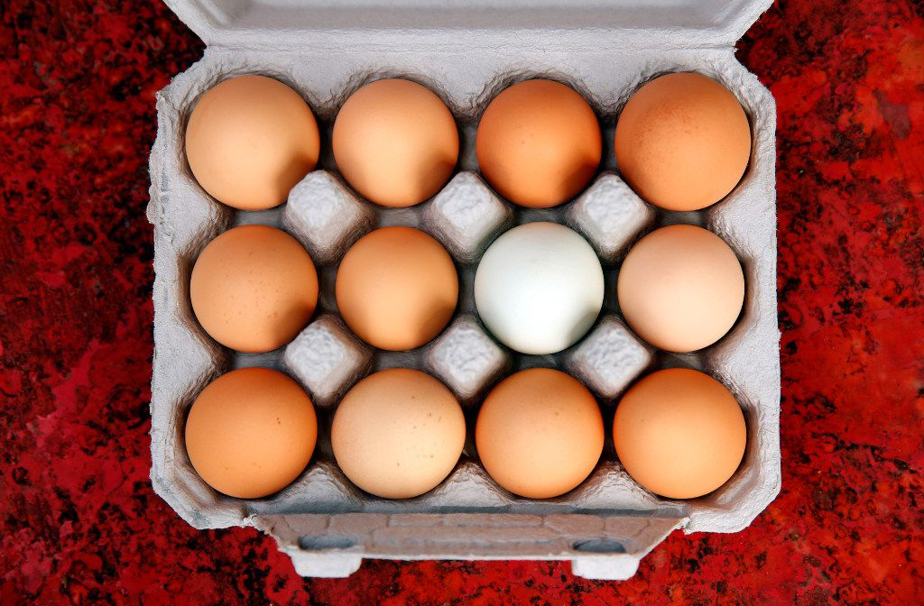 A fresh dozen eggs are placed in a carton and chilled on the Bois d'Arc farm in Allens Chapel, Texas.
