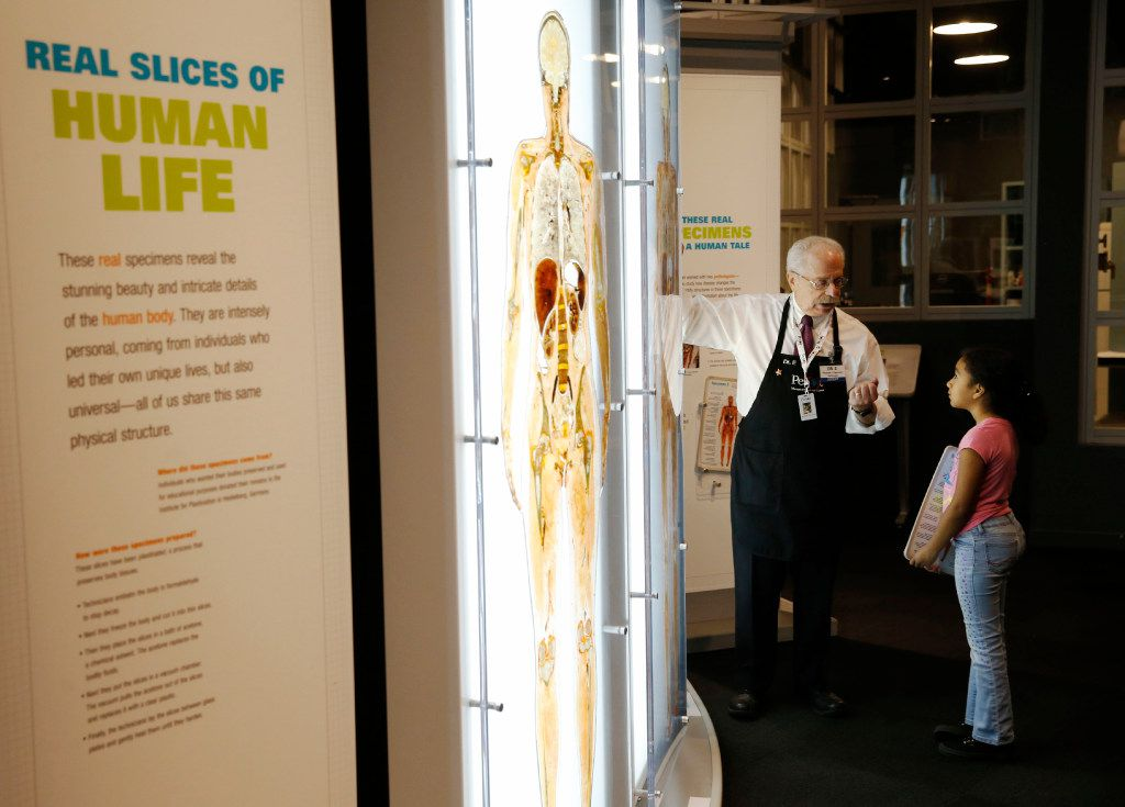 Docent Paul Ellenbogen talks about one of the slices of human life with Sylvia Rodriguez, 9, of Spring, in an exhibit at the Perot Museum of Nature and Science.