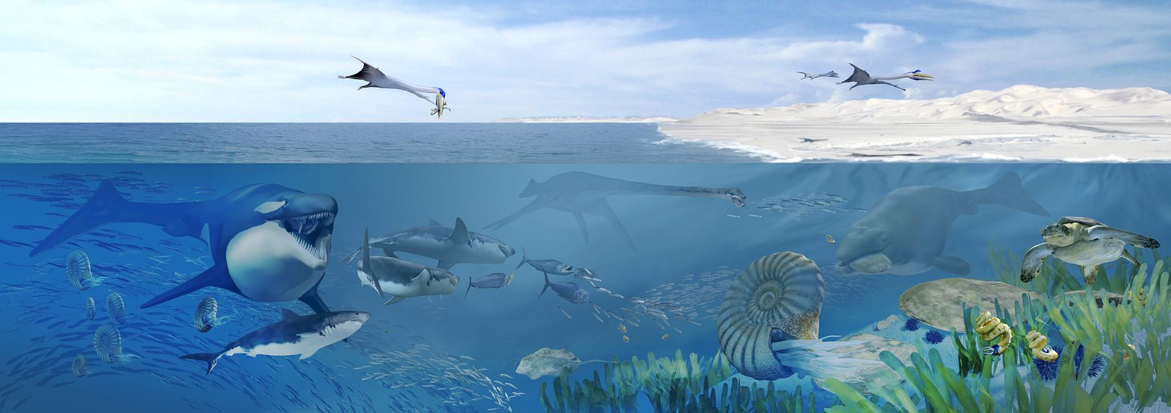 An artist'€™s rendering of Angola'€™s Cretaceous seas 72 million years ago, dominated by many species of large, carnivorous marine reptiles. If you traveled back in time to the Late Cretaceous, the water was filled with carnivorous reptiles, like mosasaurs and plesiosaurs. Even some of the sea turtles were enormous.