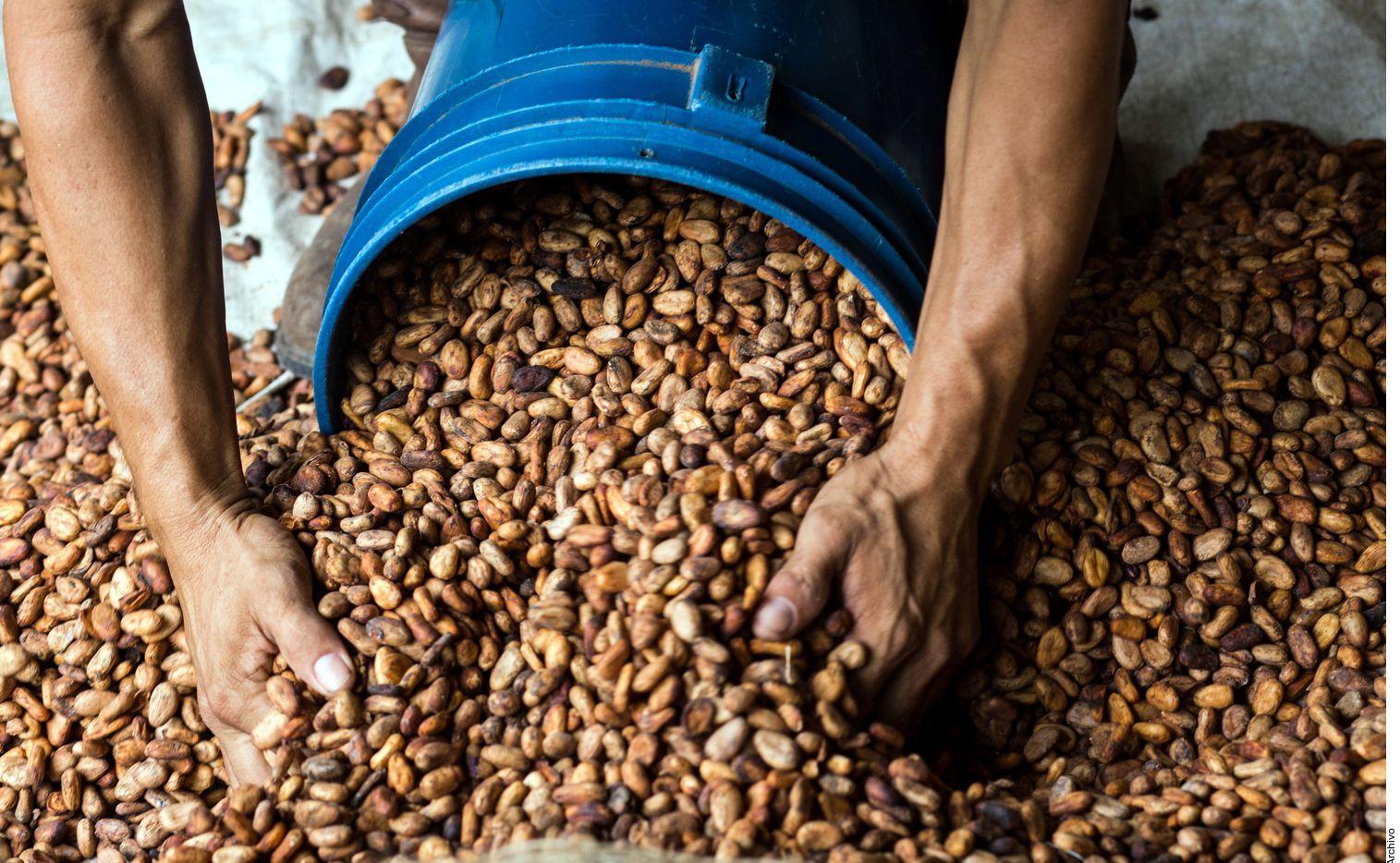 Como demuestra el hallazgo en Belice de una vasija que contenía restos de cacao, las bebidas a base de chocolate ya existían, como mínimo desde el siglo 6 a.C.