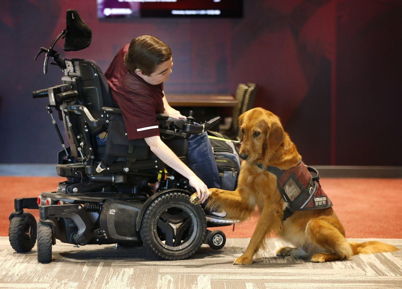 Texas A&M graduate student Kyle Cox, who has Duchenne Muscular Dystrophy, shakes Amber's paw before heading to symphonic band rehearsal at the new Music Activities Center on the Texas A&M campus in College Station, Texas, Wednesday, September 11, 2019.