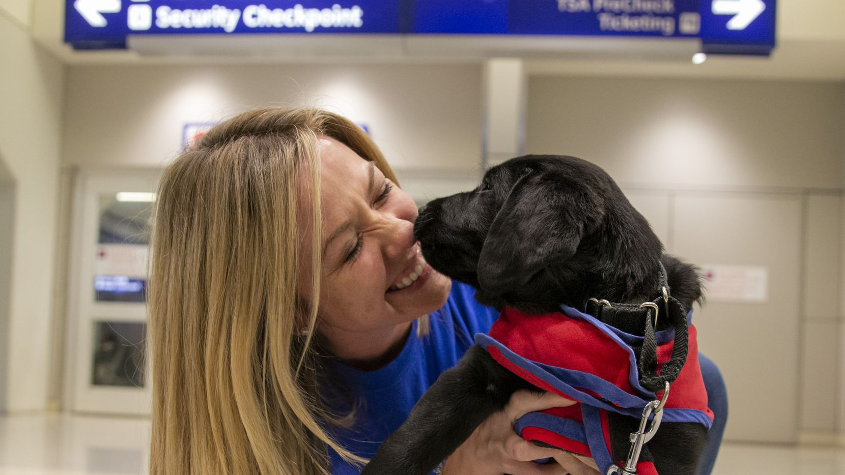 Caroline Clayton, an American Airlines employee, received a kiss from an 8-week-old Lab puppy named Pine at DFW International Airport in Dallas in January. Pine was transported through American Airlines' Puppies in Flight Program.