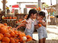 Elli Rios, izquierda, y Lili Rios, ambas de cuatro años de edad, escogen calabazas en Lola's Local Market en Melissa, Texas, el 10 de octubre de 2021.