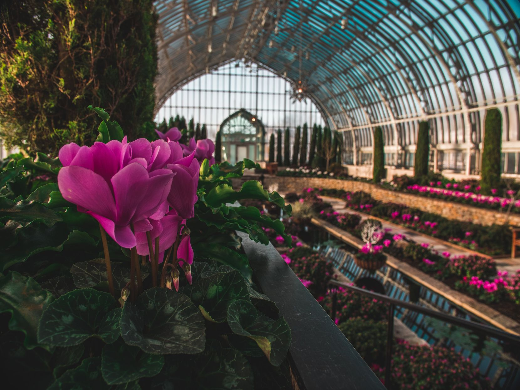 The Como Park Zoo and Conservatory displays bold colors at its winter flower show.