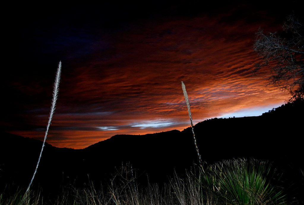 Cactus are lit by a camera strobe as the first light of dawn shows over the mountains from the Indian Lodge in Davis Mountains State Park in Fort Davis in West Texas. (2016 File Photo/Guy Reynolds)
