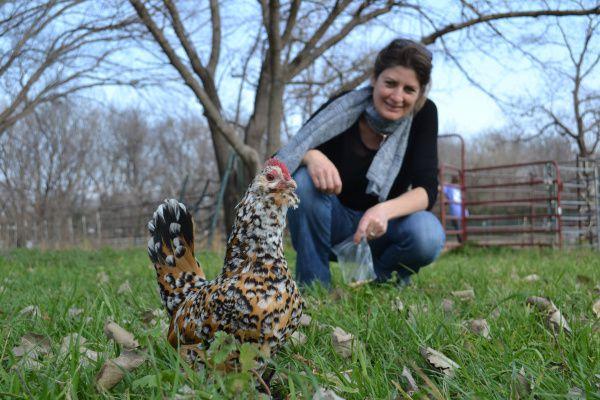 Grand Prairie permite tener gallinas dentro de los límites de la ciudad bajo estrictas condiciones. En otras municipalidades como University Park, donde se fotografió a la gallina Henny Penny (frente), no se permite tener pollos en el patio.