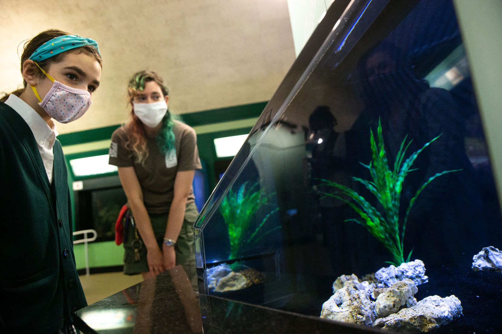 Margeaux Maurer (left), a fifth-grade student at The Hockaday School, and Laura Gratke, assistant supervisor, examined the cuttlefish exhibit at the Children's Aquarium at Fair Park in Dallas on Friday, Nov. 13, 2020. Maurer was invited by Dallas Zoo staff to visit the aquarium after she wrote a letter to express her sadness at the aquarium's closing and ask that it reopen. Shortly after, City Council member Adam Bazaldua identified unused city bonds to keep the aquarium afloat for two more years, but it's still unclear whether or not the venue will reopen any time soon. (Lynda M. Gonz�lez/The Dallas Morning News)