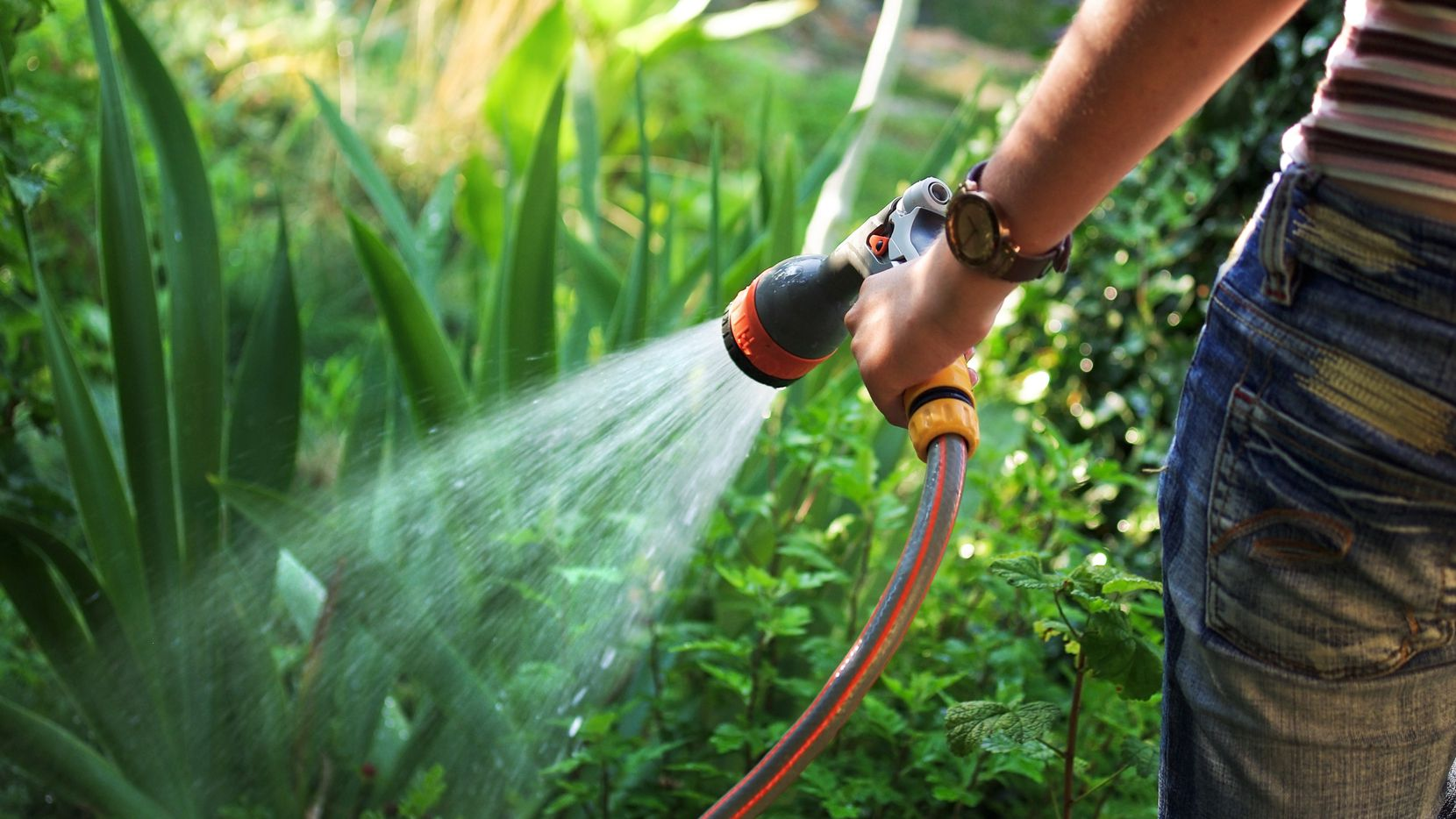There's more to watering your plants than just turning on the hose