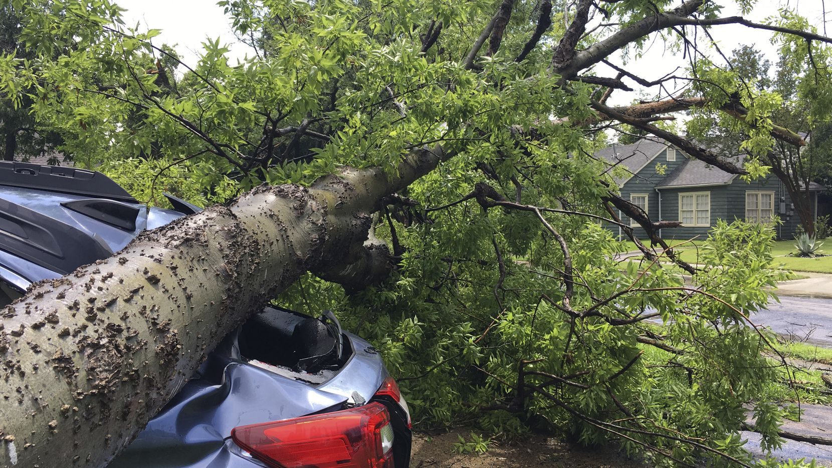 A tree from one property smashed a car in a neighbor's driveway when it fell in a severe storm in the area of North Henderson and I-75/Central Expressway on Sunday afternoon.