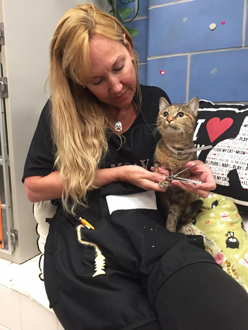 Molly DeVoss doesn't take a moment off during her shelter work. When she stopped for a moment to answer questions, she used that time to also do some claw clipping.