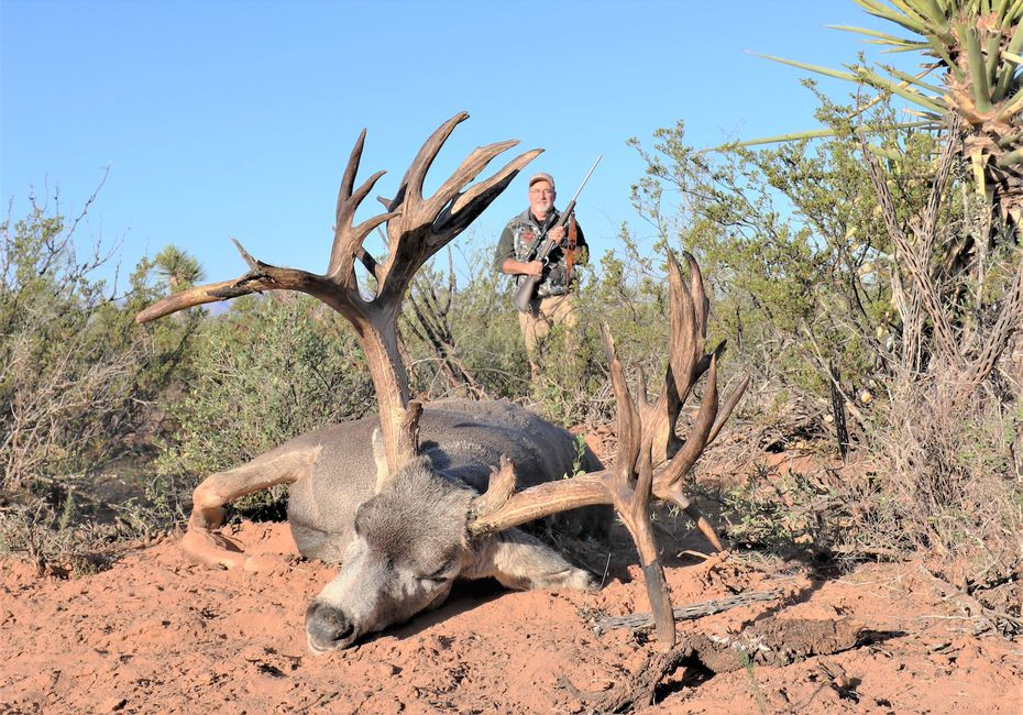 Last November, San Angelo hunter Greg Simons brought down this massive 27 point free ranging Texas mule deer buck in Culberson County. The deer was officially scored for Boone and Crockett all-time records and the Texas Big Game Awards program on Jan. 11. With a net B&C score of 292 1/8, it is the biggest open range, native mule deer ever reported statewide.
