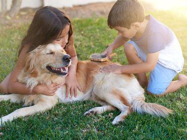 SPCA tiene un programa enfocado a los hispanos para esterilizar, vacunar y colocar el microchip a las mascotas. Todo es completamente gratuito.