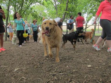 Dog About Town Sniffing Out Treats And The Easter Bunny And More